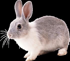Download كحك العيد Kahak Aleid Png Images Background Png Free Png Images Pet Rats Rabbit Cartoon Images Rabbit