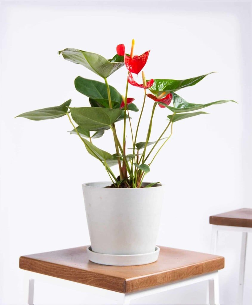 Blooms For Beginners These Flowering Houseplants 400 x 300