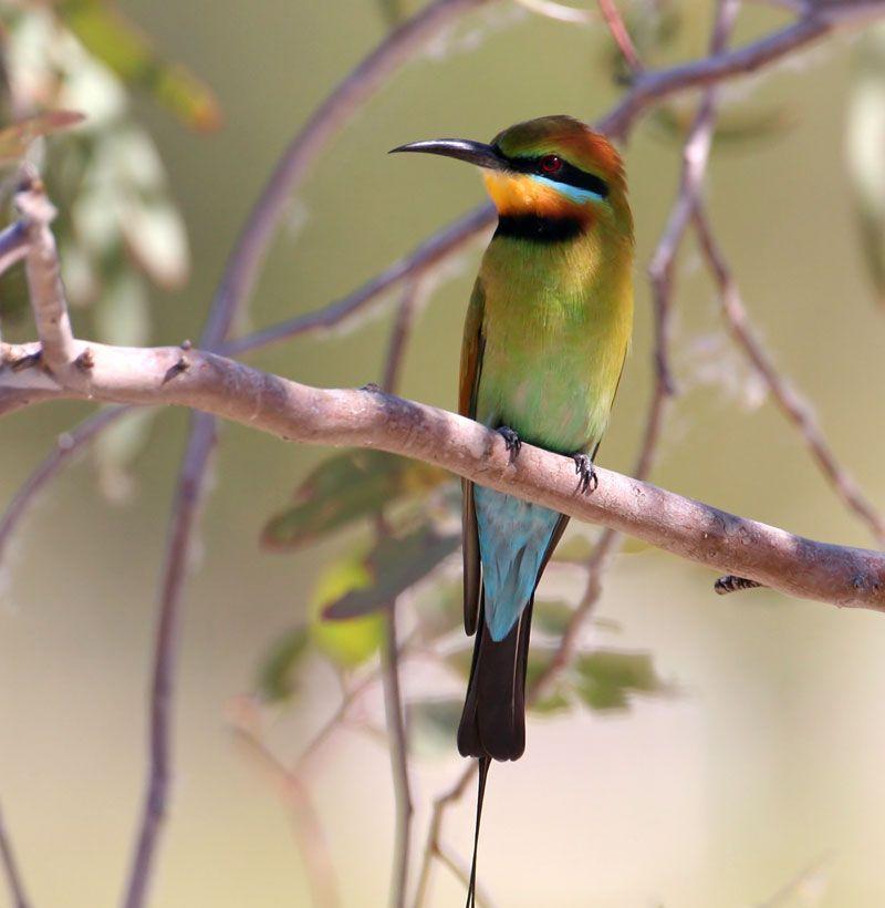 Https Www Google Com Au Blank Html Tropical Birds Backyard Birds Birds