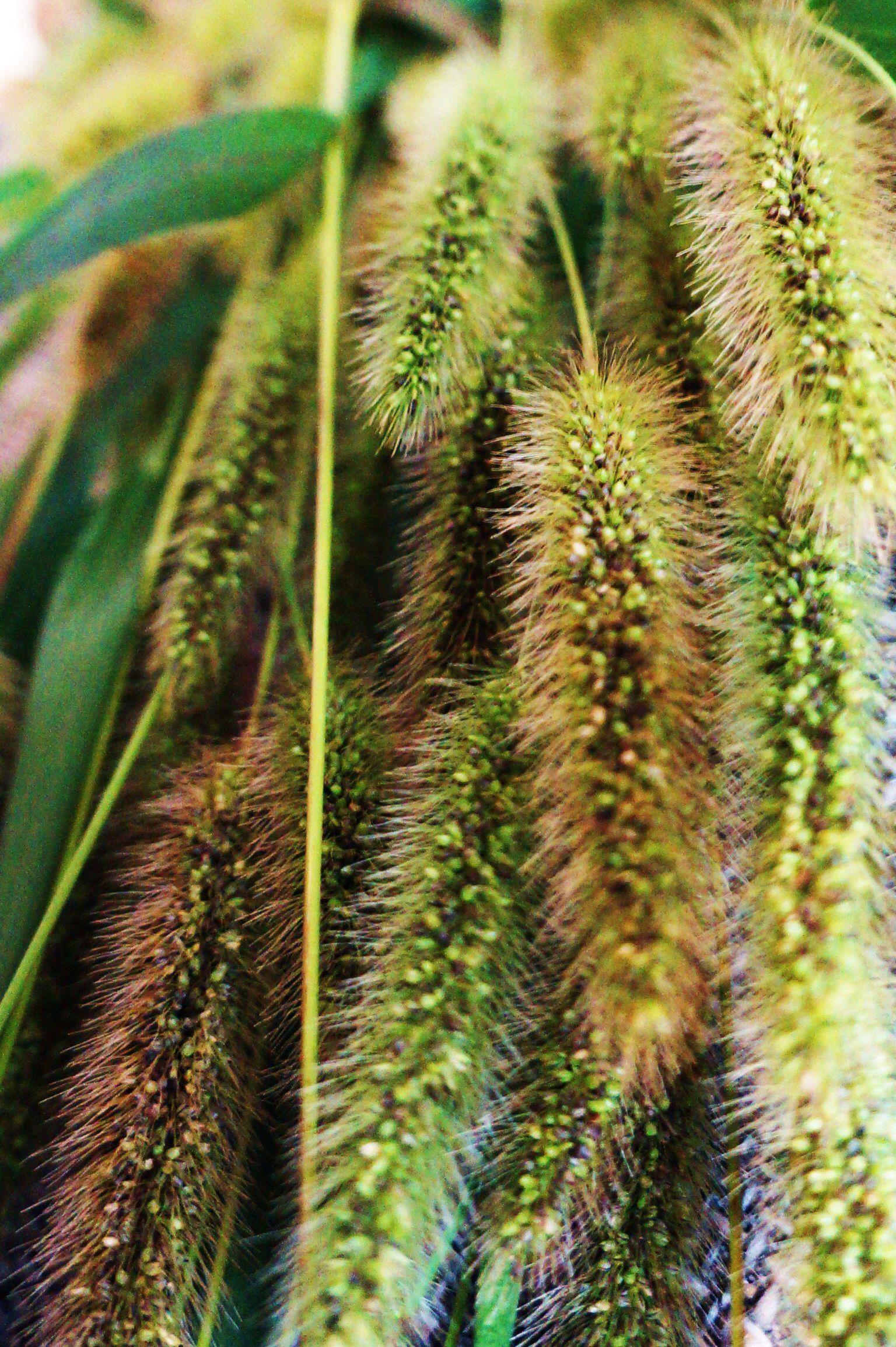 Gräser garden pinterest