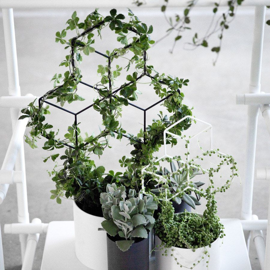 and a planter for vines who love geometry inside plantsinside - House Plants Vines