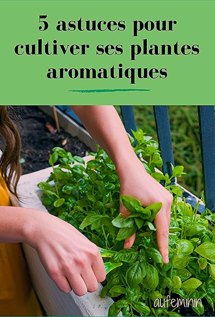 Pin by Eunice Rutherford on Blumentöpfe Herbs