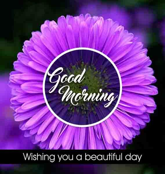 Purple flower good morning image in 2020 | Good morning ...