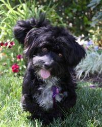 Adopt Nellie On Petfinder