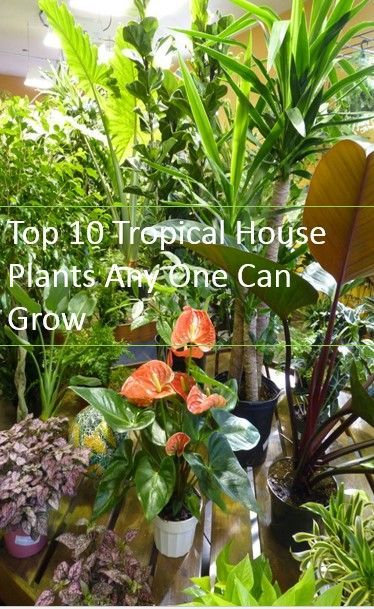 10 Tropical House Plants Any One Can Grow Indoors 400 x 300