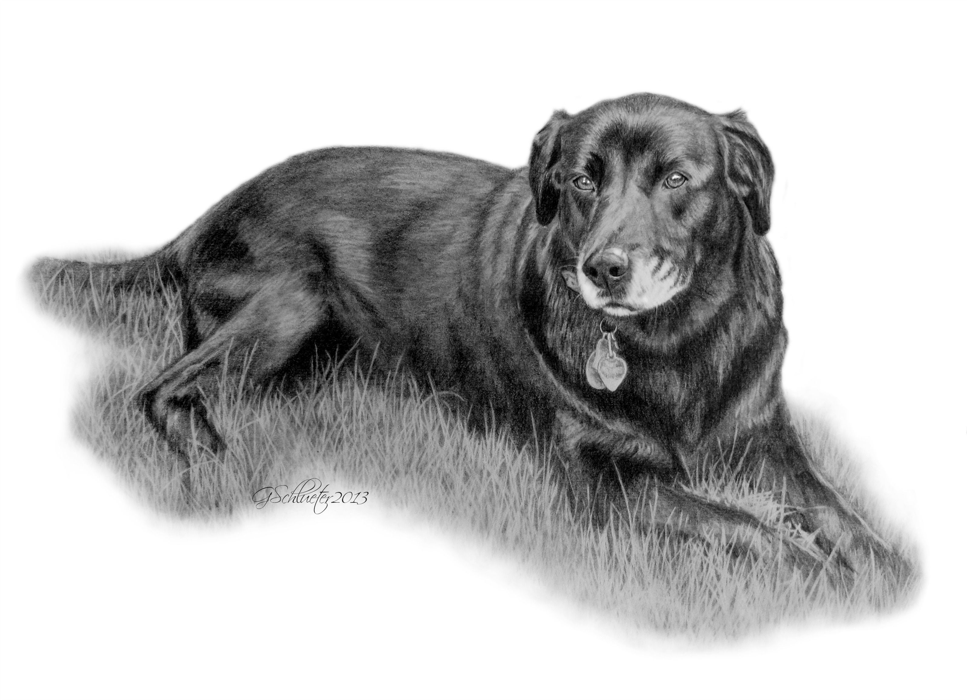 how to draw a chocolate lab