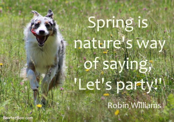 Robin Williams Quote About Spring Happy Australian Shepherd Dog