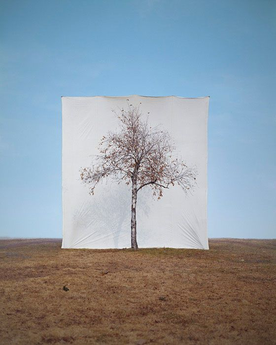 """""""Myoung Ho Lee photographs solitary trees framed against white canvas backdrops in the middle of natural landscapes. Minor components of the canvas support system, such as ropes or bars, are later removed from the photograph through minimal digital retouching, creating the illusion that the backdrop is floating behind the tree. Mr. Lee's 'portraits' of trees play with ideas of scale and perception while referencing traditional painting and the history of photography."""""""