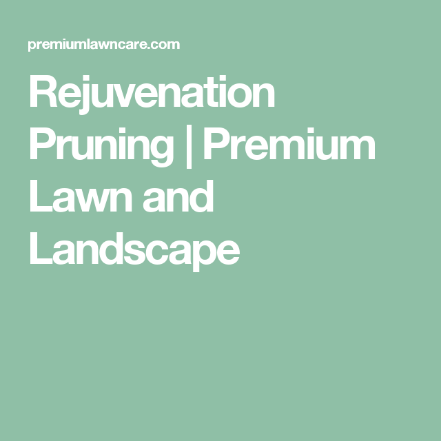 Rejuvenation Pruning | Premium Lawn and Landscape - Rejuvenation Pruning Premium Lawn And Landscape Garden Stuff