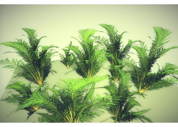#bush - cgtrader https://www.cgtrader.com/free-3d-models/plant-tree/shrub-bush/low-poly-tropical-shrub