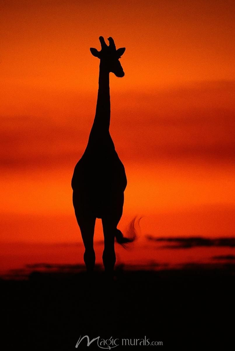 Sunset In Botswana Animal Photography Wildlife National Geographic Images Silouette Photography
