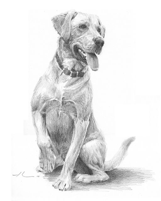 Artist unknown drawing dogs google search