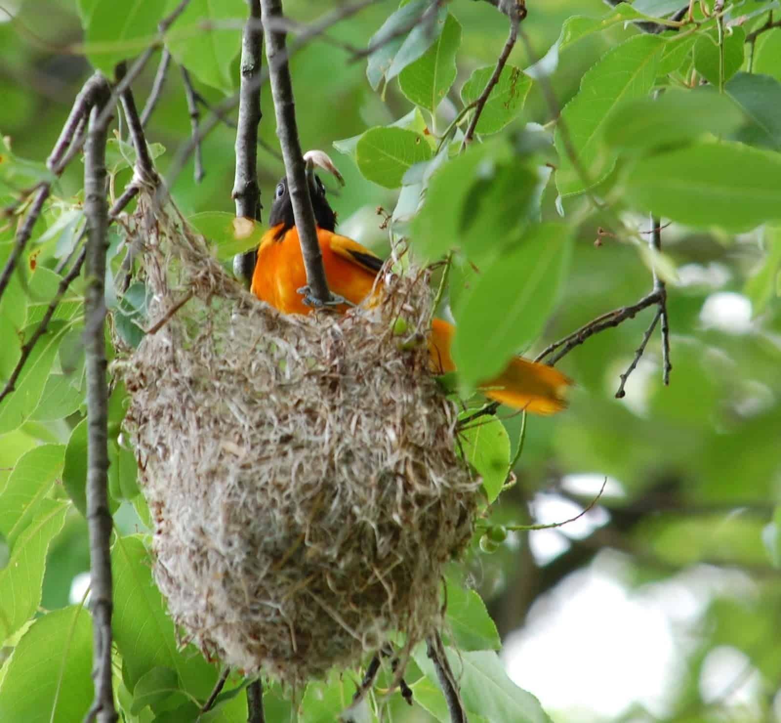 How To Get Rid Of Bird Nest In Window