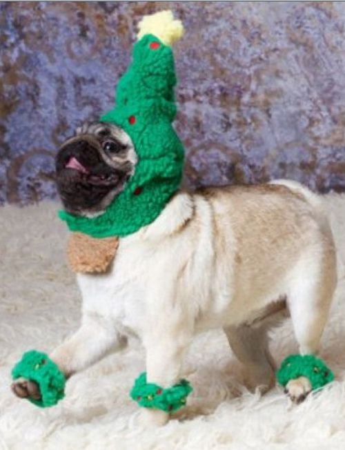 Christmas Tree Pug Part 2 Puppy Loveand A Few Other Animals I