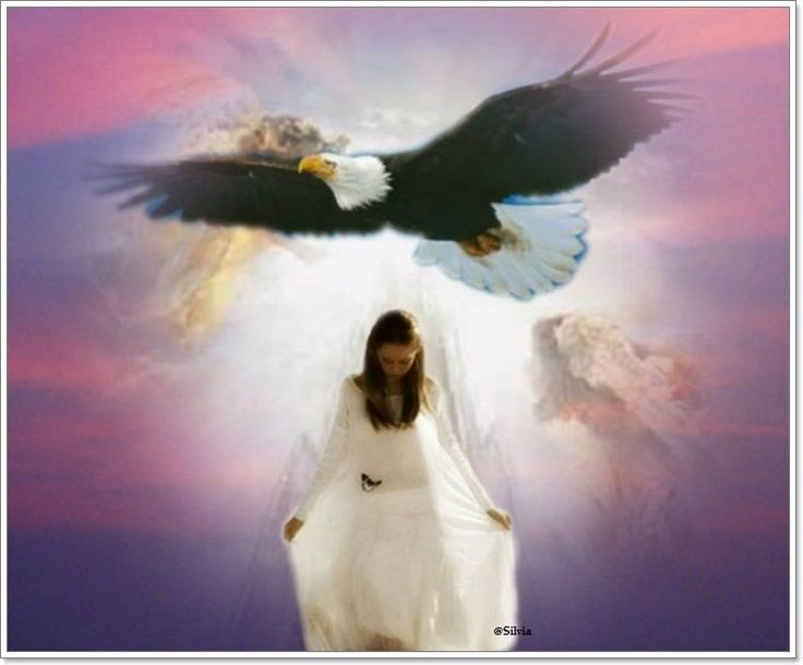 It is time to move up to higher spiritual ground where  we can find fresh anointing and revelation of the Kingdom of God th… | Prophetic art, God art, Eagle pictures