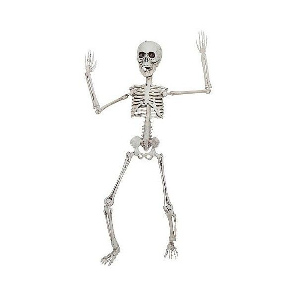 Halloween Poseable Skeleton Ivory 12 Liked On Polyvore Featuring Home Home Decor Skeleton Decorations Poseable Skeletons Halloween Skeleton Decorations