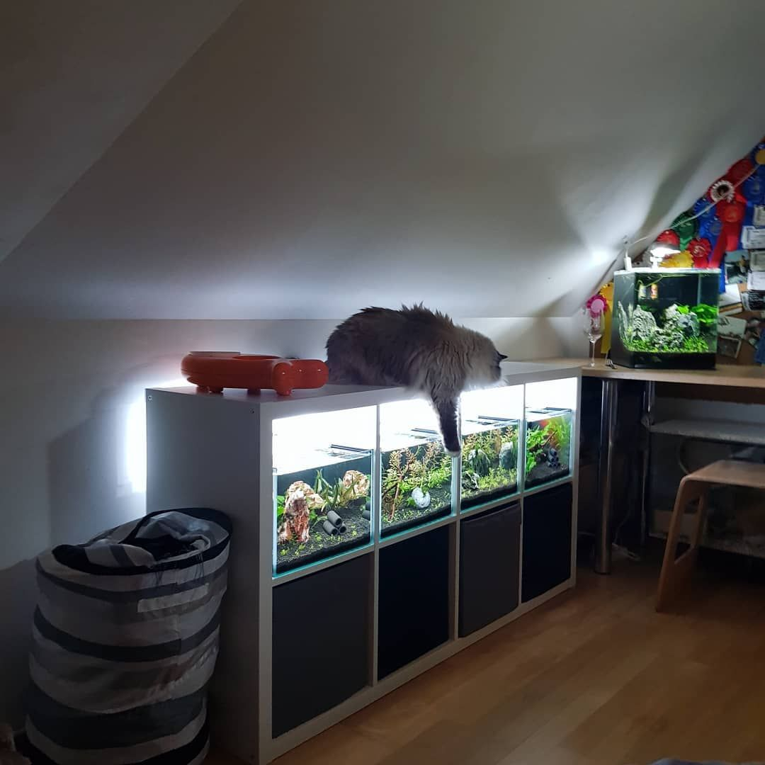 Fish Plants And Hamsters Turning Ikea Cabinet Into A Viable Aquarium Stand Aquarium Stand Ikea Cabinets Fish Tank Cabinets