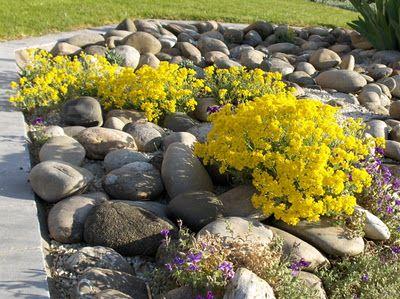 Arte y jardiner a dise o de jardines plantas de rocalla for Plantas para rocallas