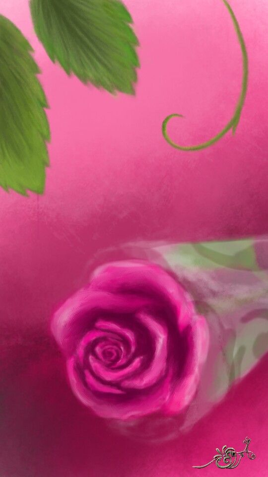 وردة الجوري فوشية Flowers Plants Rose