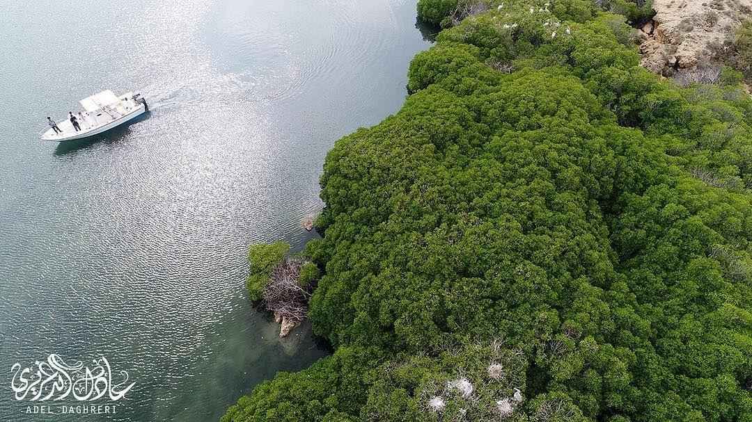 غابة القندل جزيرة فرسان منطقة جازان Outdoor Water River