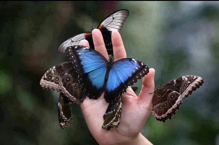 مساء الفراشات الملونة Beautiful Butterflies Butterfly Butterfly Species
