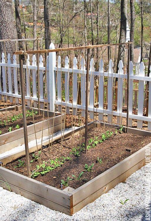 Exceptional Build A Trellis For Garden Plants And Garden Peas