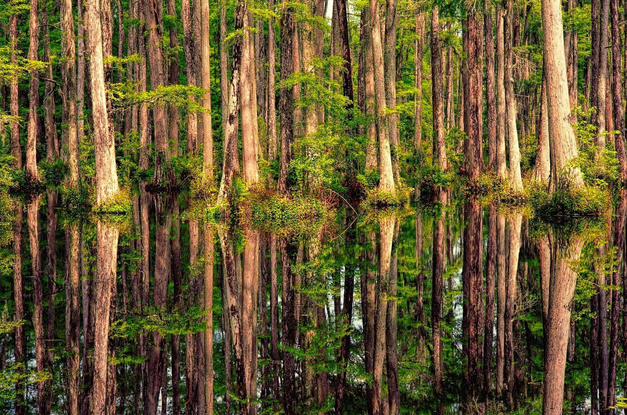 Cypress Reflections (South Carolina) by Dirk Seifert / 500px   2 ...