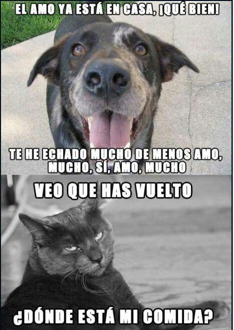 Diferencia Entre Perros Y Gatos Perros Graciosos Memes Perros Chistes De Perros