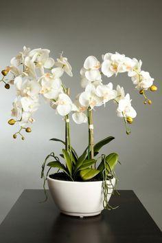 Las Flores Mas Bonitas Del Mundo Balcony Plants Beautiful