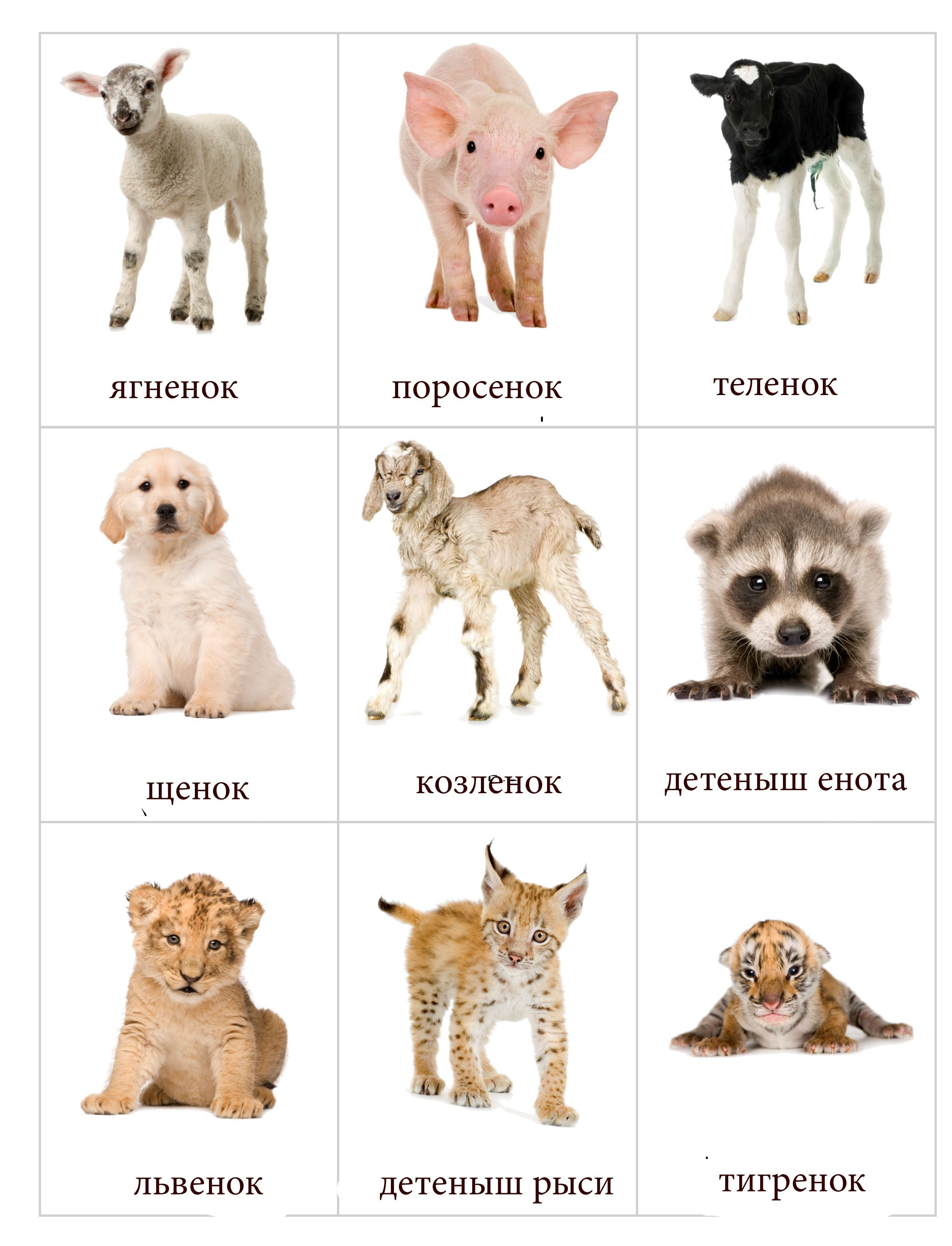 Детские развивающие дидактические карточки с животными ...