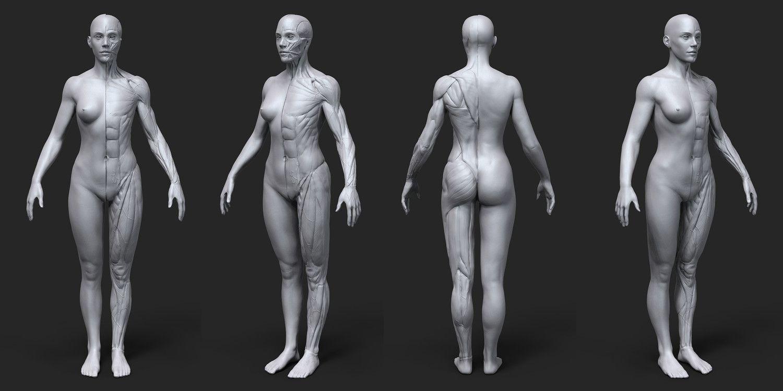 Фото женского тела органов, Женские половые органы строение и функции 17 фотография