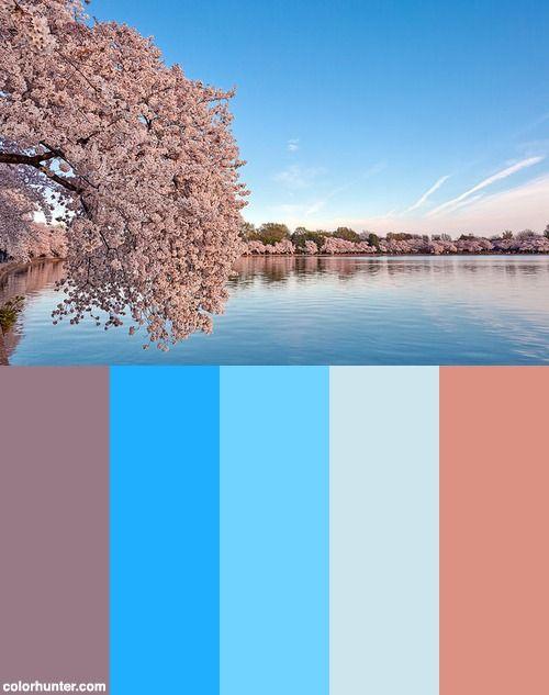 Washington Dc Cherry Blossoms Hdr Color Palette Color Palette Cherry Blossom Palette