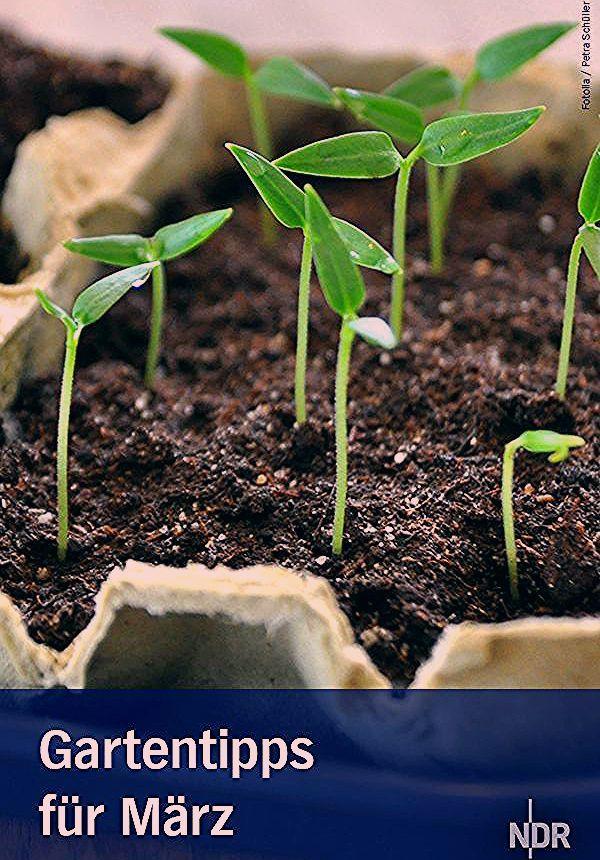 Photo of Garten: Tipps für März