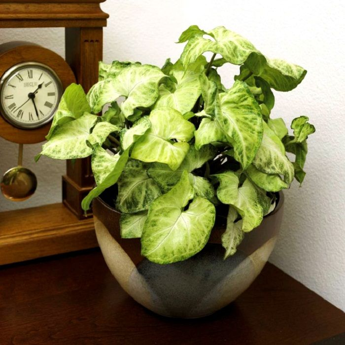 11 best indoor vines and climbers you can grow easily in your home - House Plants Vines