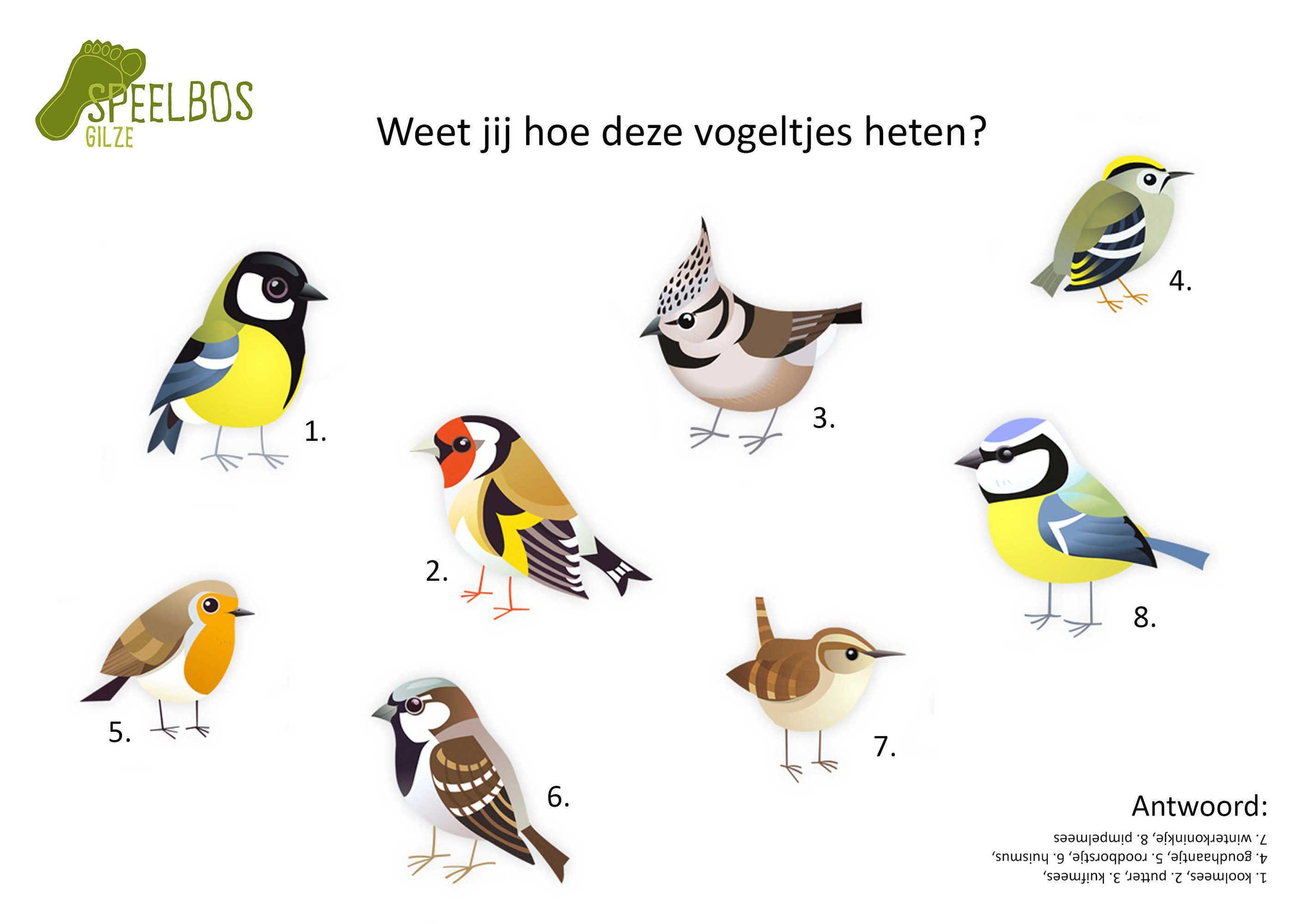 Weet Jij Hoe Deze Vogeltjes Heten Vogel Thema Vogels Vogeltjes
