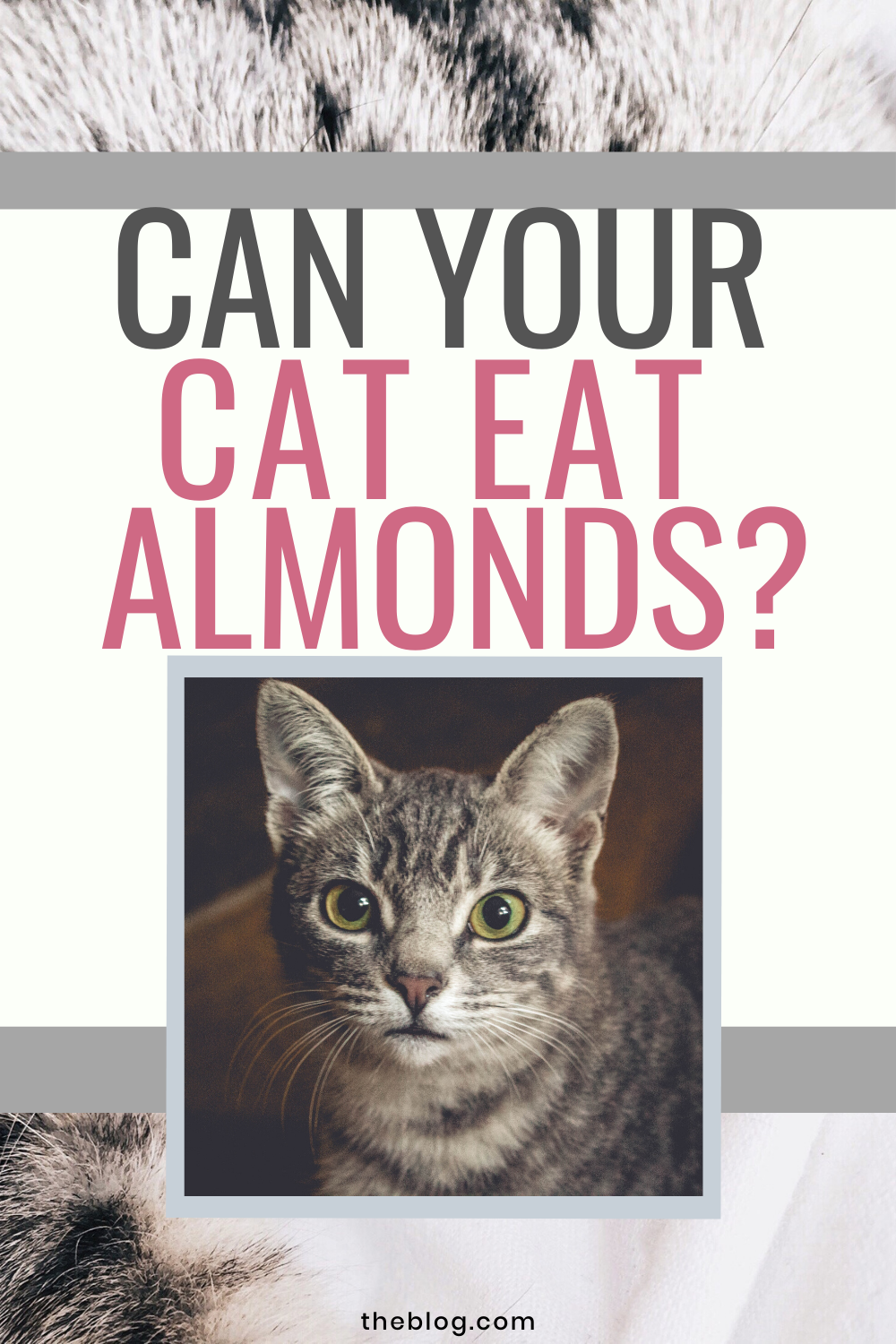 Can Cats Eat Almonds Cat Feeding Station Almond Cat Feeding