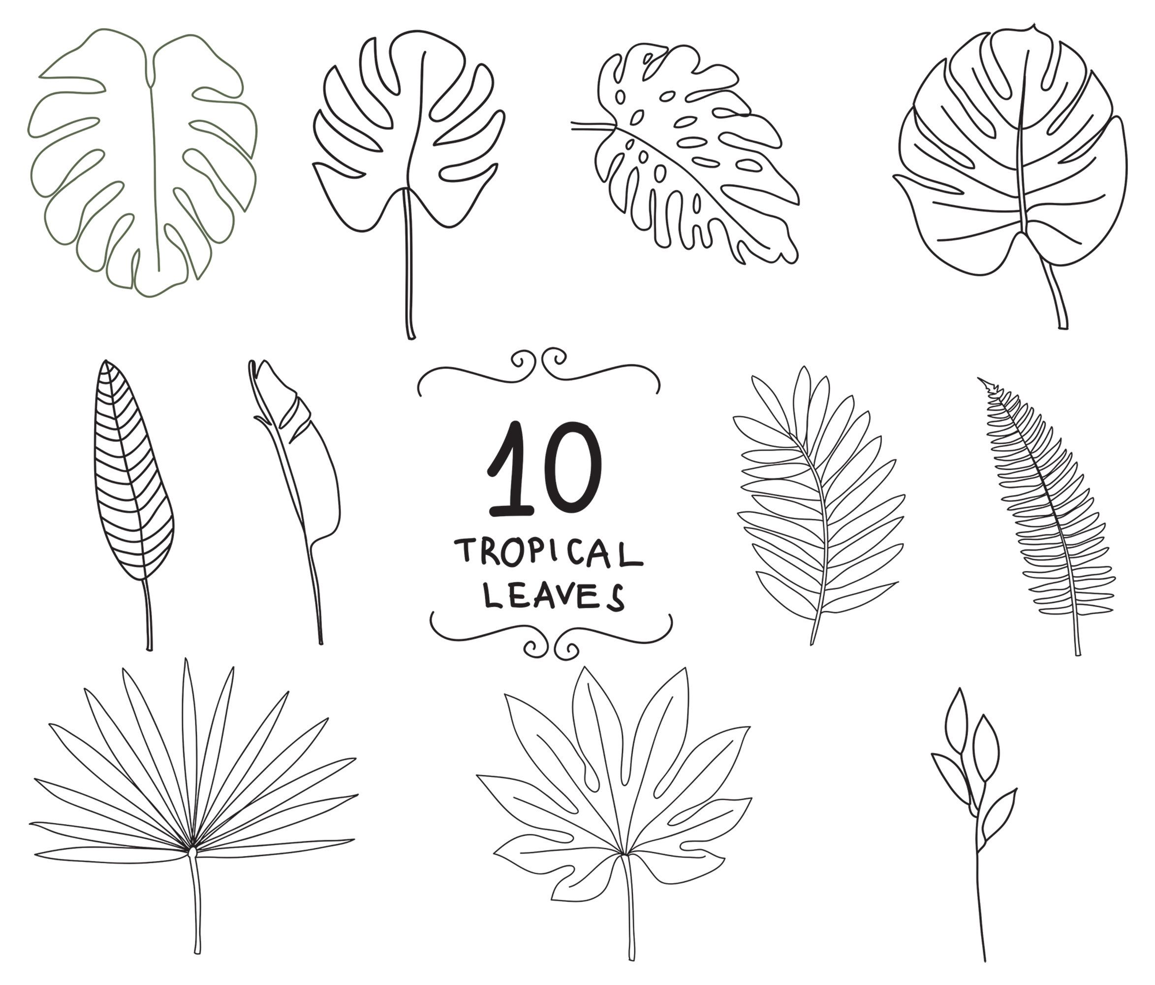 Tropical Leaves Svg And Png Doodles Jungle Leaf Svg Leaves Etsy Leaves Doodle Leaf Drawing Plant Doodle A l i c e m c r a e _. png doodles jungle leaf svg leaves
