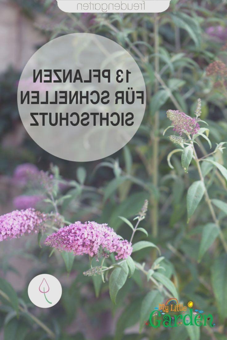 Schnell wachsende Pflanzen #schnellwachsendepflanzen Schnell wachsende Pflanzen  #pflanzen #schnell #wachsende #schnellwachsendepflanzen Schnell wachsende Pflanzen #schnellwachsendepflanzen Schnell wachsende Pflanzen  #pflanzen #schnell #wachsende #schnellwachsendepflanzen Schnell wachsende Pflanzen #schnellwachsendepflanzen Schnell wachsende Pflanzen  #pflanzen #schnell #wachsende #schnellwachsendepflanzen Schnell wachsende Pflanzen #schnellwachsendepflanzen Schnell wachsende Pflanzen  #pflanze #schnellwachsendepflanzen