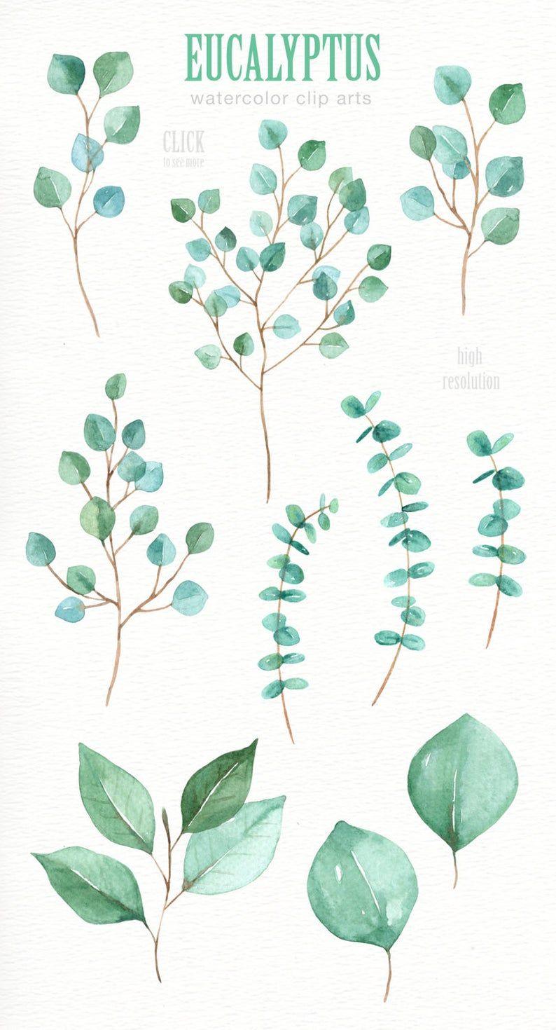 Photo of Eucalyptus Leaf Watercolor clipart, Watercolor flower, Watercolor Leaves, Leaf clipart, Wedding Clip Art, wedding invitation, wreath, green
