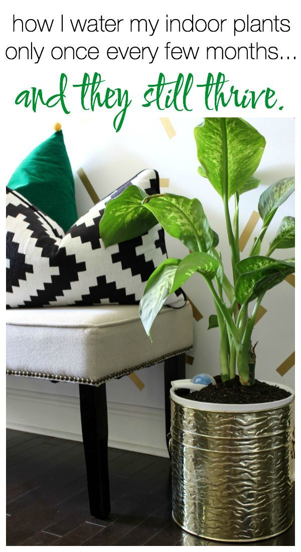 How To Grow Indoor Plants When Water Growing Indoors