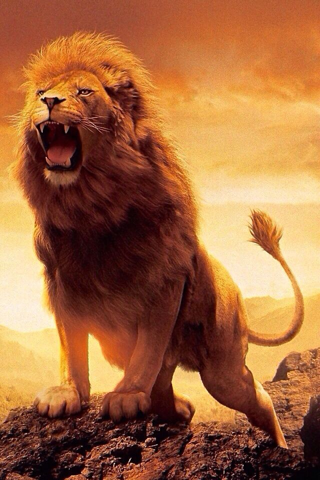 the lion of the tribe of judah my beloved pinterest lion