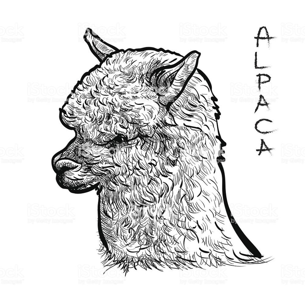 alpaca image clip art - Yahoo Image Search Results ...