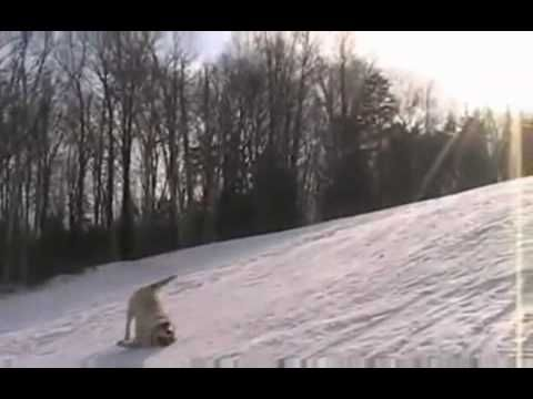Youtube Labs Angels From Heaven Snow Dogs Funny Dogs Cute