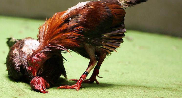 Pin Di Ayam Bangkok