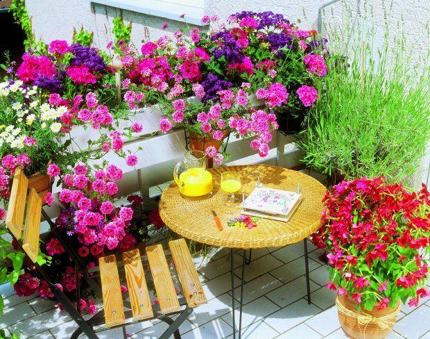 Pachnacy Balkon Najpiekniej Pachnace Kwiaty Na Balkon Small Balcony Garden Balcony Decor Small Balcony