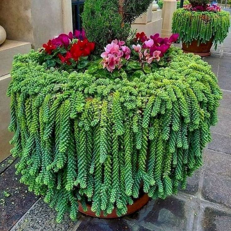 Photo of 20+ Best Succulent Gardens Designs für drinnen und draußen #designs #draussen …