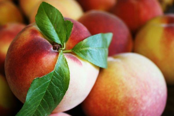 Simple W hlen Sie nur die richtige Sorte und den richtigen Ort geben Sie dem Baum gute Pflege Wie k nnen Sie einen Pfirsichbaum im Garten pflanzen und richtig
