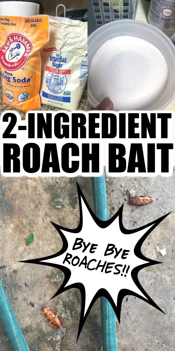 2 Ingredient Homemade Cockroach Bait (Easy Non-Tox