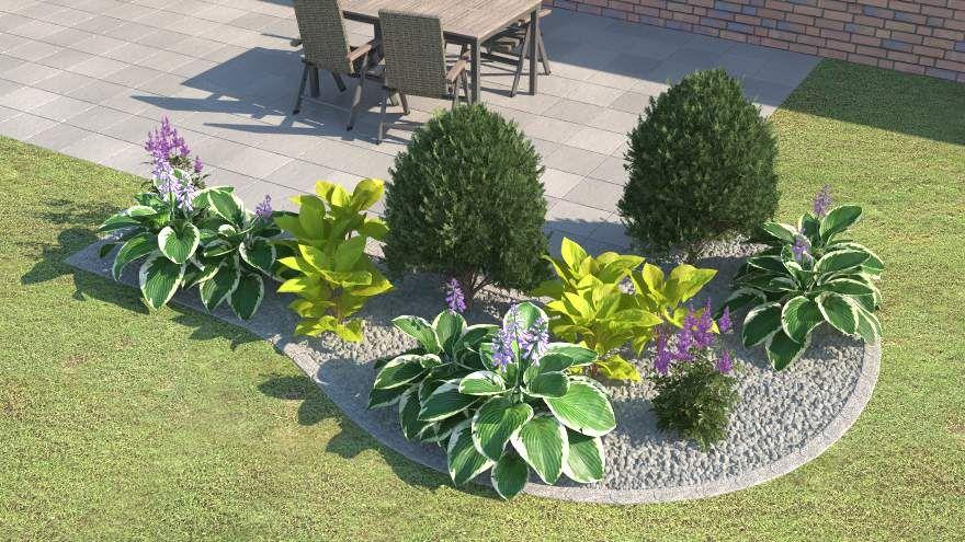 Funkien Wikipedia Plantain Lily Ornamental Plants Hostas
