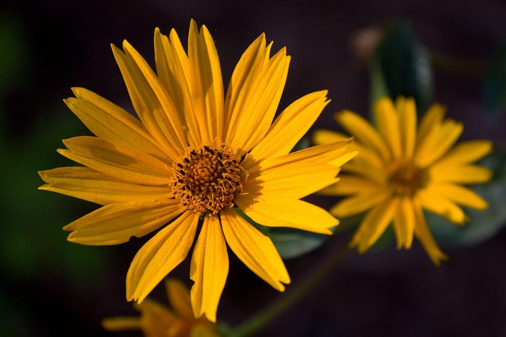 Another fall yellow flower horizon bluecoralyellow wedding decor another fall yellow flower mightylinksfo
